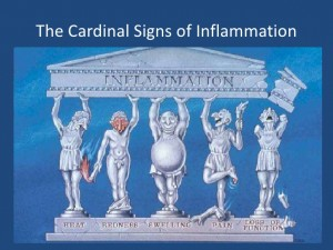 Cardinal Signs of Inflammation-Lawrence2002