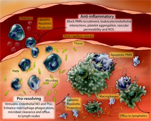 F4-SPMs in the vasculature-Serhan2010