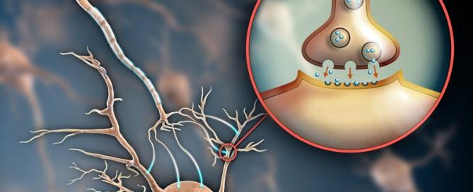 Neuron Synapse-28842055